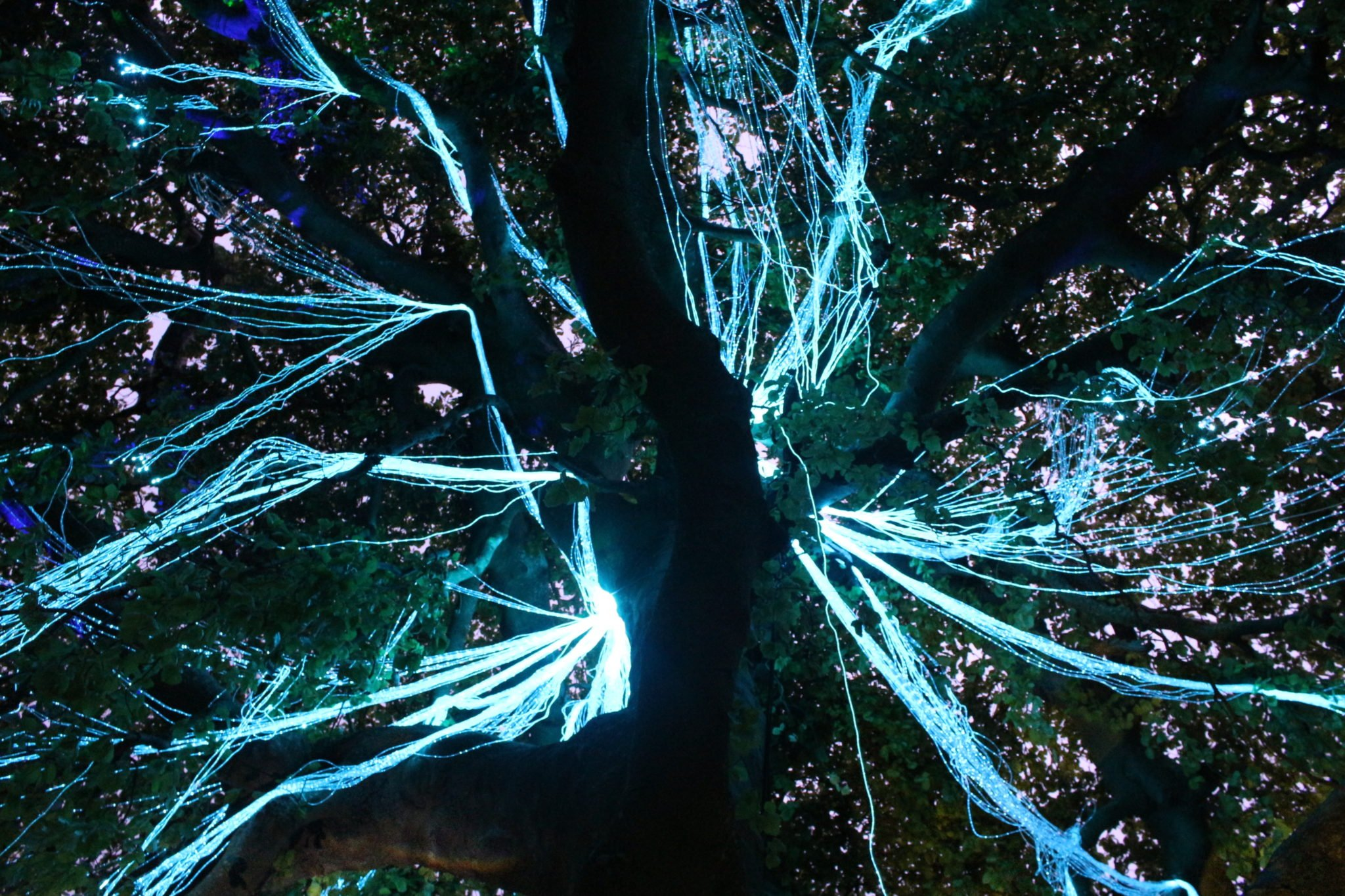 Fibre optic side glow